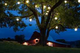 diy outdoor lights for trees home you also how use string pictures charlotte orb palm