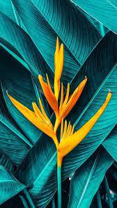Plant wallpaper, Nature wallpaper ...