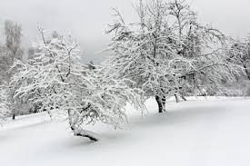 Картинки по запросу ziemas diena