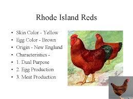 en breeds parts en rooster