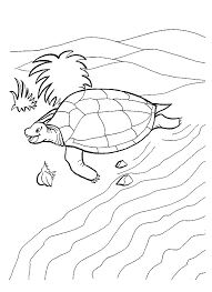 Small Picture Coloring Page Tortoise animal coloring pages 20