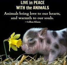 Love Animals Quotes Simple Live In Peace With The Animals Animals Bring Love To Our Hearts