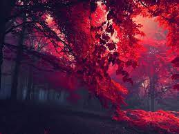 Red Autumn wallpapers