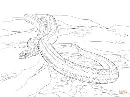 Small Picture Yellow Rat Snake coloring page Free Printable Coloring Pages