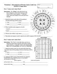 Codon To Amino Acid Circle Chart Worksheet Answers