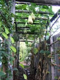 backyard gardening. Backyard Garden With Butternut Squash Gardening D