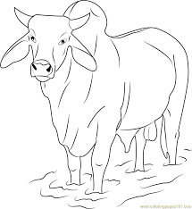 Small Picture Gray Zebu Bull Coloring Page Free Bull Coloring Pages