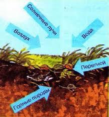 Почва Образование и состав Природоведение Реферат доклад  Рис 105 Образование почвы