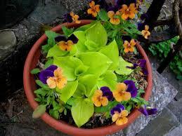Growing Hydrangeas In Pots  Container Garden Ideas  HGTVContainer Garden Ideas For Shade