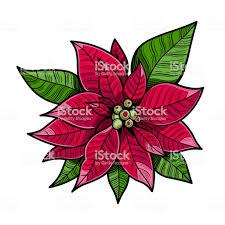 Weihnachtsstern Rot Blumen The Flower Of Christmas Hautnah