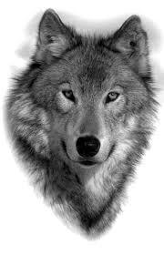 мужские эскизы тату волки