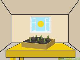 image titled plant arugula step 6