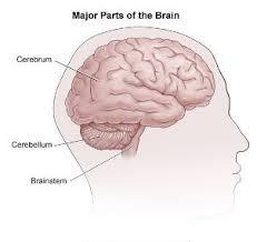 How The Brain Works Johns Hopkins Comprehensive Brain
