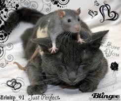 """Résultat de recherche d'images pour """"gif rat"""""""