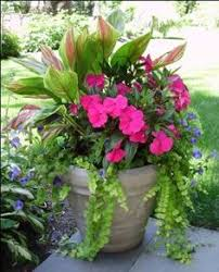 Small Picture 35 Beautiful Container Gardens Container gardening Plants and