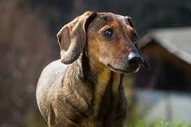 benign skin tumors in dogs