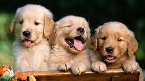 cute animal wallpapers high resolution. Ultra Cute Animals High Quality Wallpapers With Animal Resolution