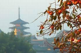 柿 食 えば 鐘 が 鳴る なり 法隆寺 夏目 漱石