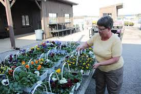 mary ann novak arranges baskets of pansies for at gale s garden center 2803 center road brunswick novak a greenhouse s associate said pansies