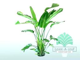 house plants for large house plants large house plants tall indoor plants large indoor plants