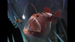 Anglerfish Wallpapers Wallpaper Cave