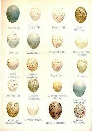 Egg Identification Chart Egg Identification Chart Very Interesting Bird Egg
