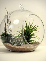 hanging glass planters hanging terrarium globe whole hanging