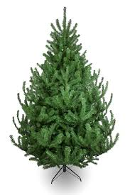 The Mountain Pine Tree (4ft to 14ft)