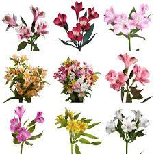fresh alstroemeria flowers 80 stems 320 blooms