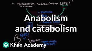 Nicholson Metabolic Pathways Chart 2 1 Molecules To Metabolism Bioknowledgy