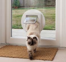 wall mount pet doors cat dog