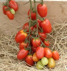Juliet Roma Tomato Seeds West Coast Seeds