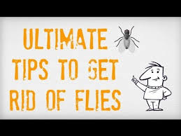 ultimate tips on how to get rid of flies getting rid of flies