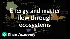 Producer And Consumer Venn Diagram Flow Of Energy And Matter Through Ecosystems Video Khan