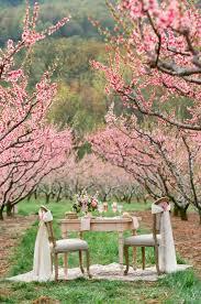 southern cherry blossom wedding ideas elizabeth anne designs
