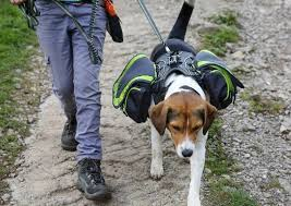dog backpack pro harness