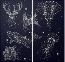 Sada Konstelace Slon Sova Jeleni Velryby Medúzy Liška Hvězdy Vektorová Grafika