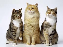 Resultado de imagen de imagenes de gatos