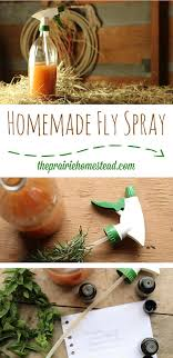 how to get rid of flies 13 natural and homemade fly repellents