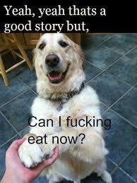 Uninterested Dog. via Relatably.com