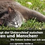 Sprueche Ueber Katzen Wo Liegt Der Unterschied Zwischen Katzen Und