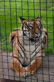 zoo animals in cages. Perfect Animals Shooting Through A Fence Bad Example  For Zoo Animals In Cages