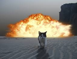 exploding cats. Contemporary Exploding Exploding Cats U0026 Panic Attacks U2022 Walking On Custard And The Meaning Of Life Throughout