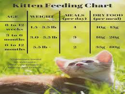 Kitten Feeding Chart Feeding Your Kitten Kitten Food Chart And Food Kitten