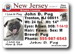 Jersey New License New Drivers Jersey