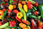 chilis peppers