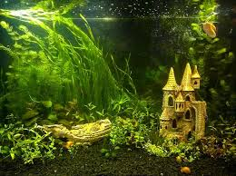 5 diy aquarium substrate ideas you can