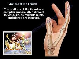 Finger Rom Chart Motions Of The Thumb Everything You Need To Know Dr Nabil Ebraheim