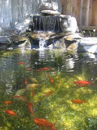 Small Picture Best 20 Pond design ideas on Pinterest Koi pond design Koi