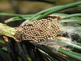 Egg Entomologists Glossary Amateur Entomologists